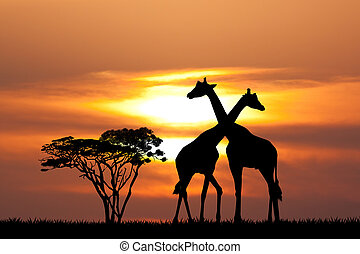 giraffe silhouette at sunset - illustration of giraffe...