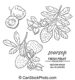 soursop,  vector, Conjunto