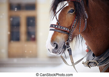 Portrait of a horse in a harness.