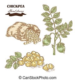 Hand drawn chickpea plant. Seeds, chickpea leaves and sack...