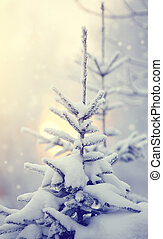 Snow-covered fir-tree - The fir-tree in the winter, is...