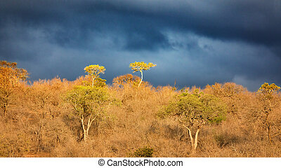 Stormy skies and sunlight in Kruger