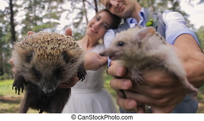 Two little happy hedgehogs in hands of bride and groom. -...