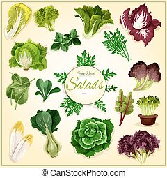 Salad leaf and vegetable greens poster with fresh healthy...