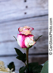 Wedding bouquet of white and pink flowers including roses,...