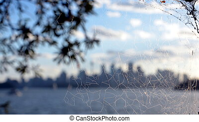 Spider web with Sydney city skyscrapers background.
