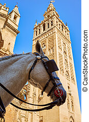 Seville cathedral Giralda tower with horse head in Sevilla...