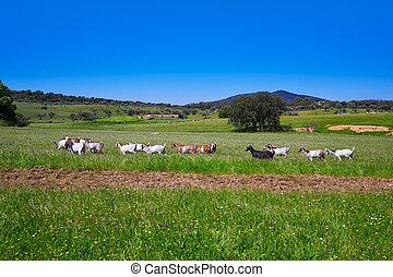 Via de la Plata way in Extremadura - Via de la Plata way...