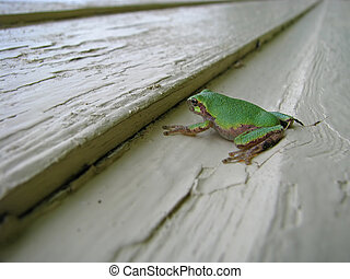 Small green tree frog
