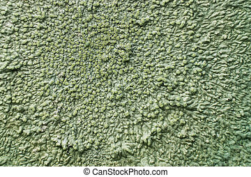 Lichens are symbiotic fungi. They are able to grow on the...