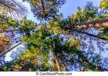Trees and clear sky in the forest