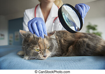 Medical test with use of magnifying glass