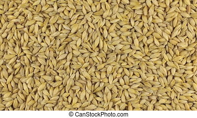Slow rotation of the heap of barley grains. View from above