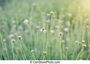 De-focus grass flower on the meadow at sunlight nature...