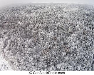 aéreo, Inverno, neve, árvores, floresta, vista