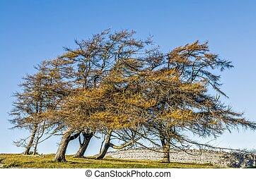 Wind blown trees in field - Wind blown trees in green field...