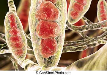 funghi,  trichophyton, illustrazione
