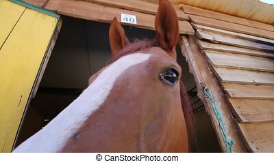 brown horse in the stable - View of a cute brown horse...