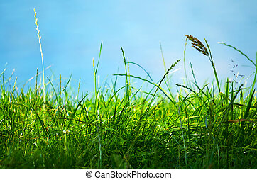 Green Grass and Blue Sky - Close-up. Spring landscape with...