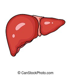 Human liver icon in cartoon style isolated on white...