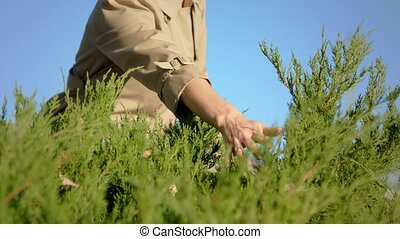 Woman's hand touching the plant, Woman is 'feeling nature' -...