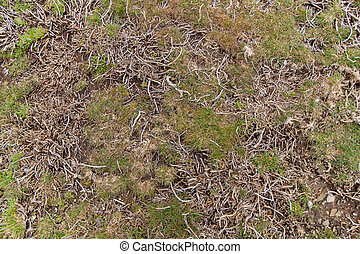 High mountain vegetation with tiny grass with tough roots.