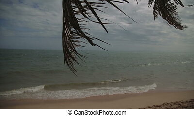 wind shakes branches of palm bent over sand beach against...
