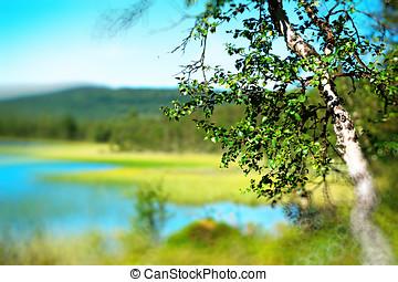 Birch tree bokeh  lake landscape background hd