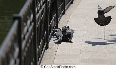 Pigeons on the waterfront