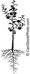 Seedling apple trees with roots and fruits - Vector...