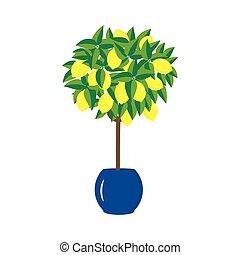 lemon tree in a pot - lemon tree in the pot, bright flat...