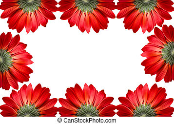 frame of red flowers isolated on white background