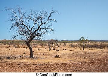 secos,  Outback,  Austrália, árido