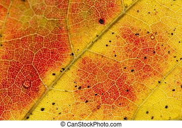 Fall Leaf Close Up 1 - Close detailed macro of a brightly...
