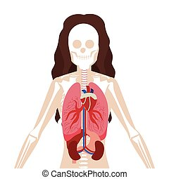 half body woman with inner organs and bones