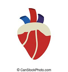 silhouette heart with valves and veins vector illustration