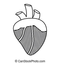 contour heart with valves and veins vector illustration
