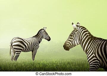 Wiese, zwei,  zebra