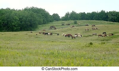 a herd of horses grazing in the meadow