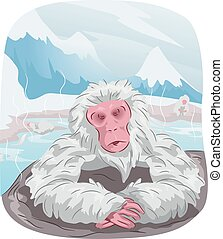 Japanese Macaque Monkey Hot Spring