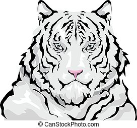 Siberian White Tiger - Animal Illustration Featuring a Large...