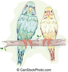 Birds Budgies Couple - Animal Illustration Featuring a Pair...