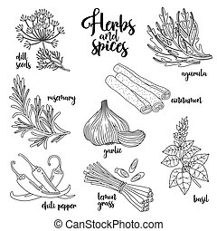 Spices and herbs vector set. Contour on white - Spices and...