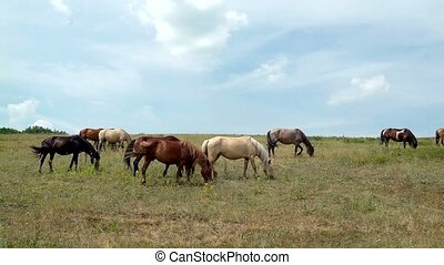 horses grazing on the background of the cloudy blue sky -...