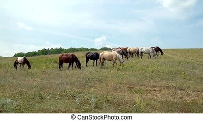 horses grazing on the background of sky - horses grazing in...