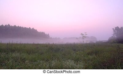 Color pink mist slowly spread along the ground HD