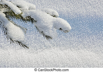 Christmas background with snow-covered branch of spruce -...