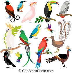 Exotic tropical birds set - Exotic tropical birds isolated...