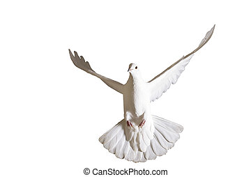 Peace dove flying isolated on white,delivery of letters, a...