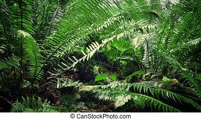 Moving Under Ferns In Forest - Dolly shot moving through the...